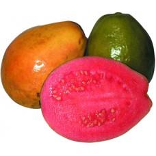 Мякоть Гуавы 100% натуральная быстрозамороженная 100 гр